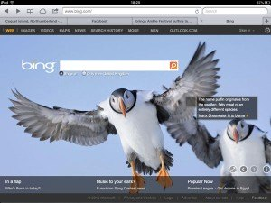 Bing-puffin-link