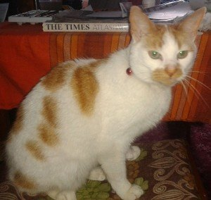 Bart the cat was rehomed by Carole Clark and her family, but sadly died after drinking antifreeze.