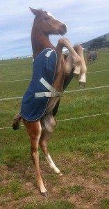 Cheeky foal Kanga