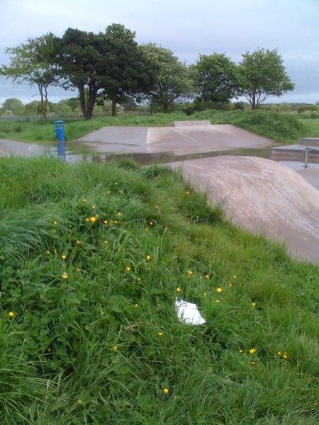 skateboard-grass