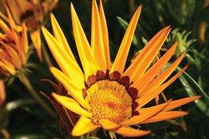 yellow-flower-w