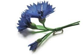 cornflower pin