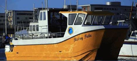 yellow-greenpeace-boat