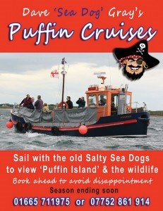 puffin-cruise2-ad