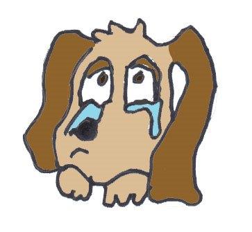 Bethanys-dog