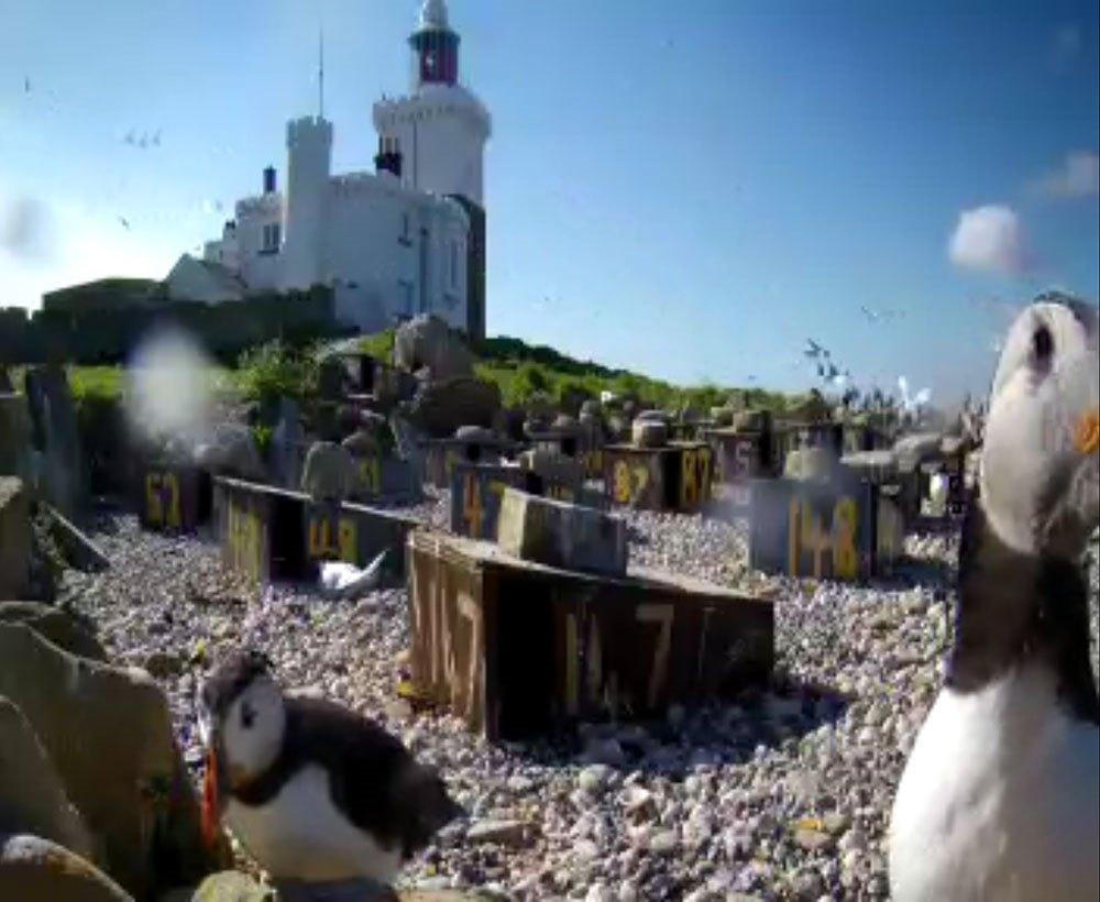 bird-cam