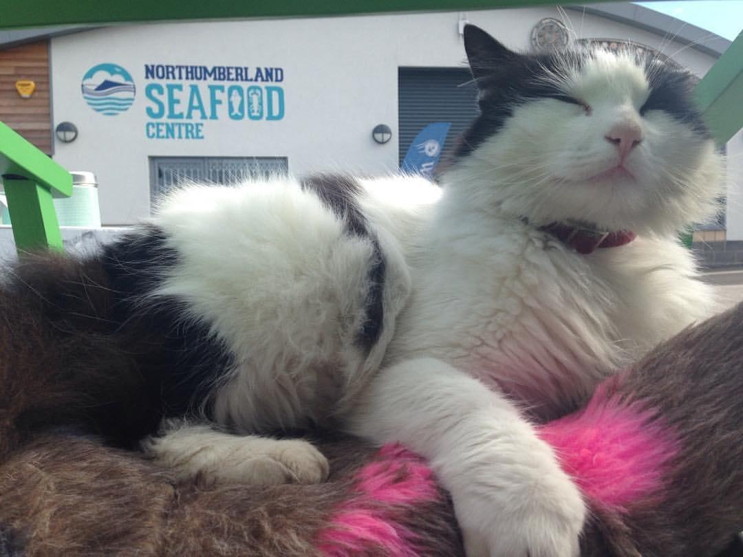 oscar-the-pod-cat-at-sfc