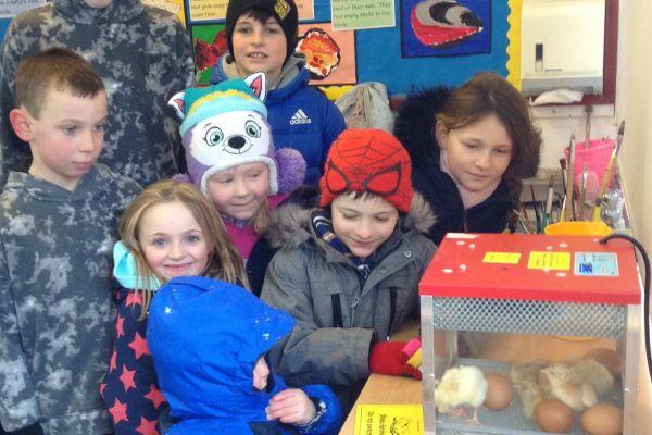Mid-blizzard rescue mission as children save chicks