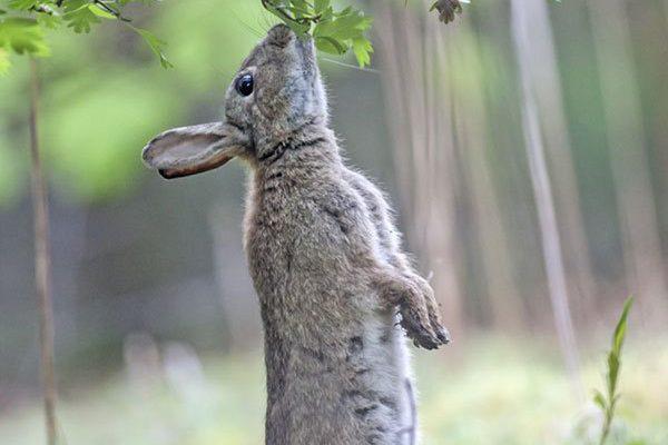 Big Wildlife Count at Druridge Bay
