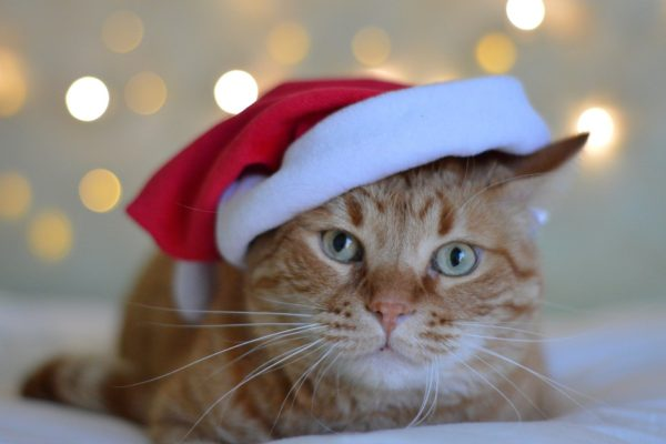 Pet care tips from Coquet Vets: Christmas puppies and kittens